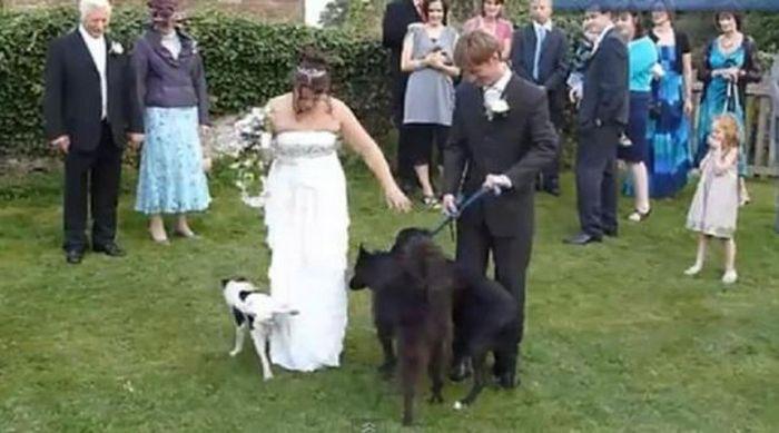 crazy wedding photos that the photographer definitely wasn t